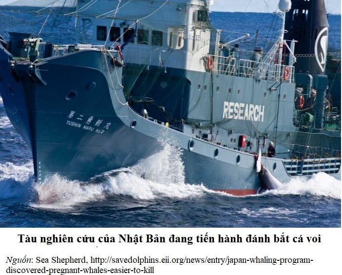 SeaShepherd_Japanese_Whaling